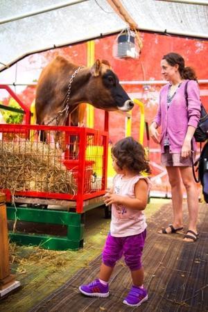 Family fun at county farm festival