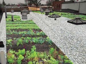 Ozone Park biz gets green from the DEP 1