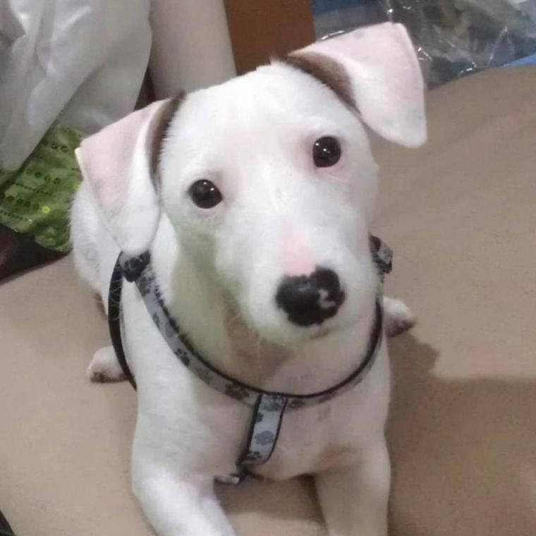 Puppy saved on Belt Parkway unites two strangers battling cancer 1