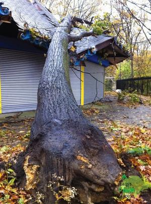 Ozone Park, Woodhaven, Richmond Hill fare well in Hurricane Sandy 1