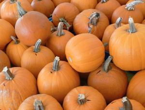 Pumpkins, squash and apples, oh my! 1