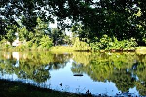 Springfield Gardens Park to be revamped  2
