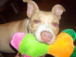 Protect your pit bulls and black cats on Halloween 1
