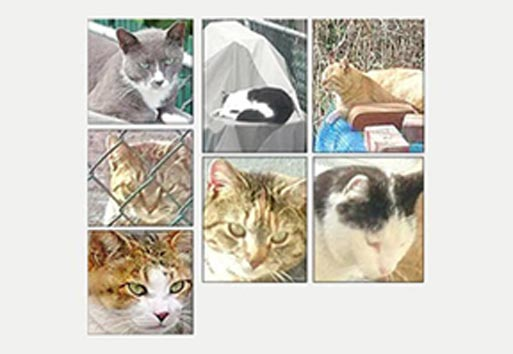 What's happening to Astoria's cats? 1
