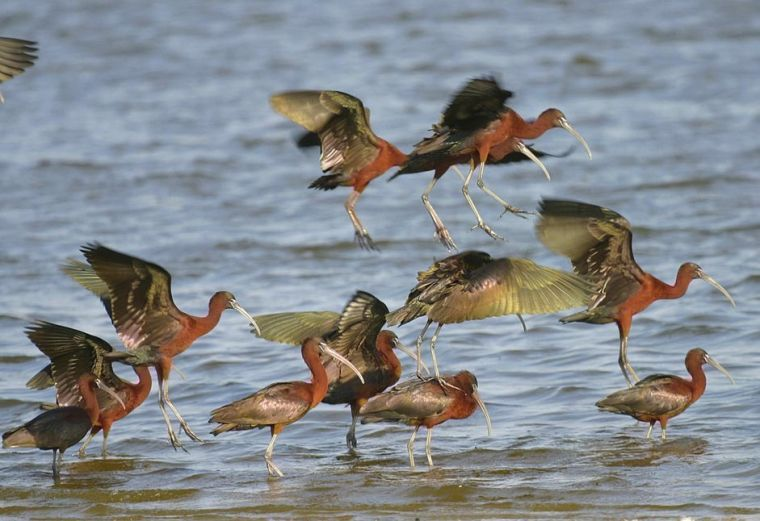 Queens: A 'fantastic place' for birdwatching