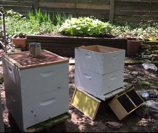 Filling the hives