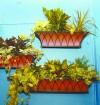 designer_plant1_13111