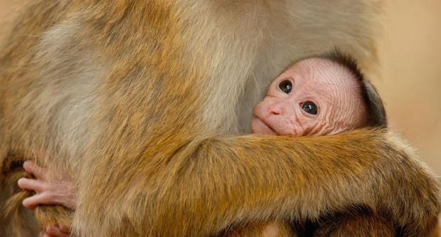Go ape over 'Monkey Kingdom'