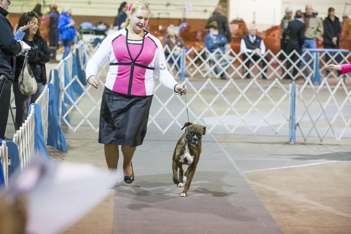 Scott County Kennel Club Akc Dog Show