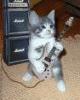 guitarman52804