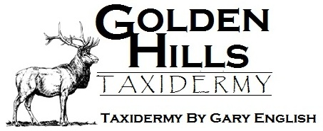 Golden Hills Taxidermy