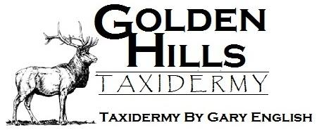 Golden Hills Taxidermy