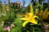 071212-fea-firewise gardening6.JPG