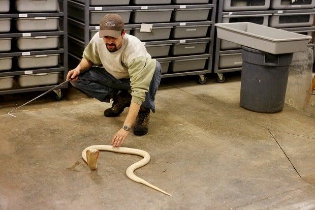 Reptile Gardens Snakes Reptile Gardens Expert Weighs