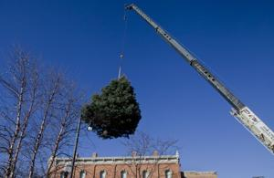 Tree placed at Main Street Square