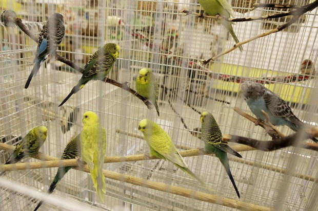 how a pet store owner moved her business  and 50 birds to boot