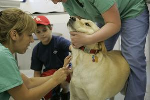 Vets confirm outbreak of canine flu in Rapid City area
