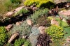 071212-fea-firewise gardening3.JPG