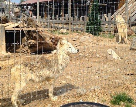 Deadwood Moves To Curb Exotic Animals Local