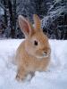 snowbunni