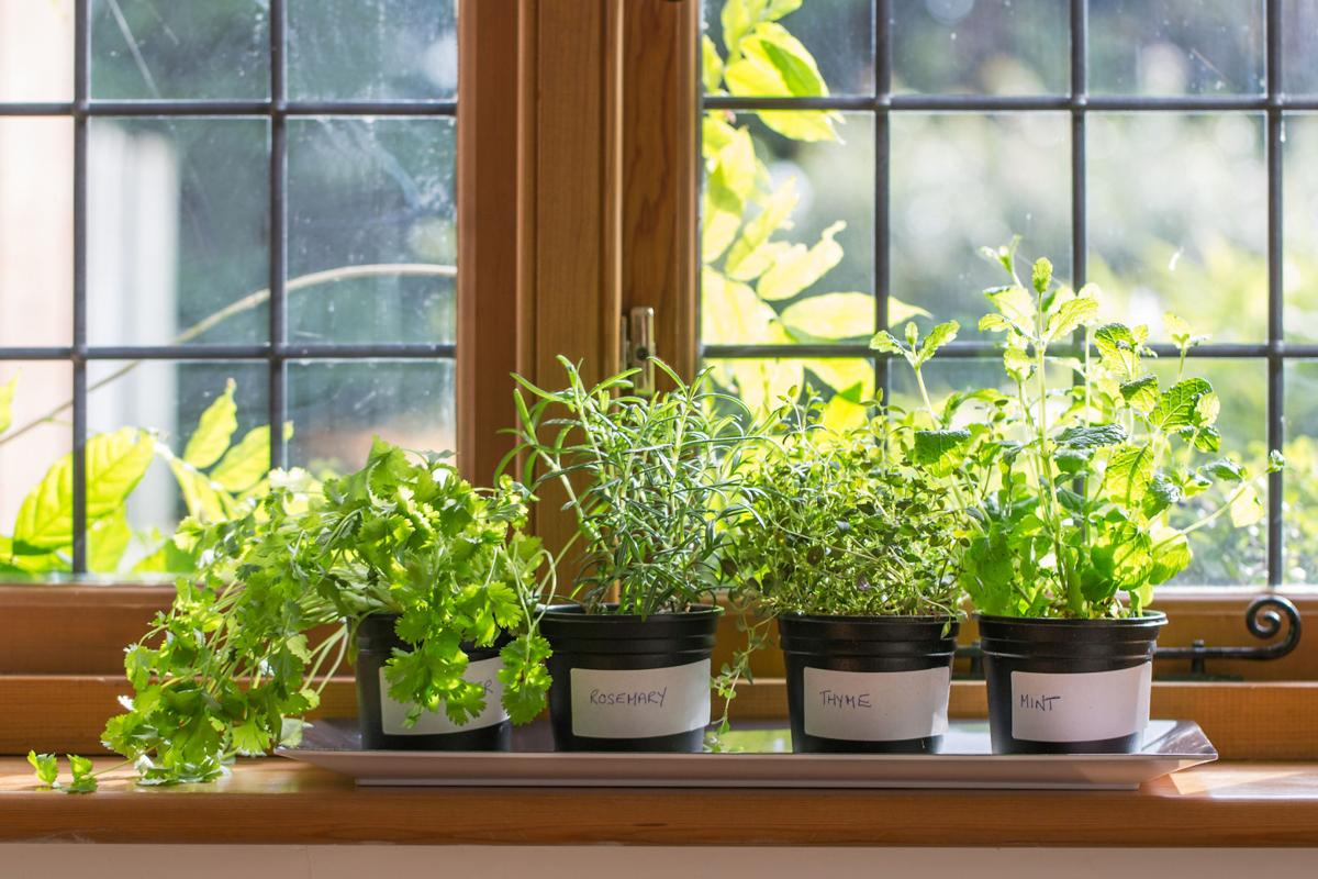 Как в домашних условиях вырастить зелень 110