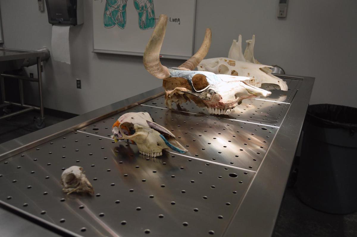 Byu anatomy lab 7070163 - follow4more.info
