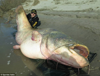 What's trending: Giant catfish, home explosion caught on tape and glow-in-the-dark ice cream