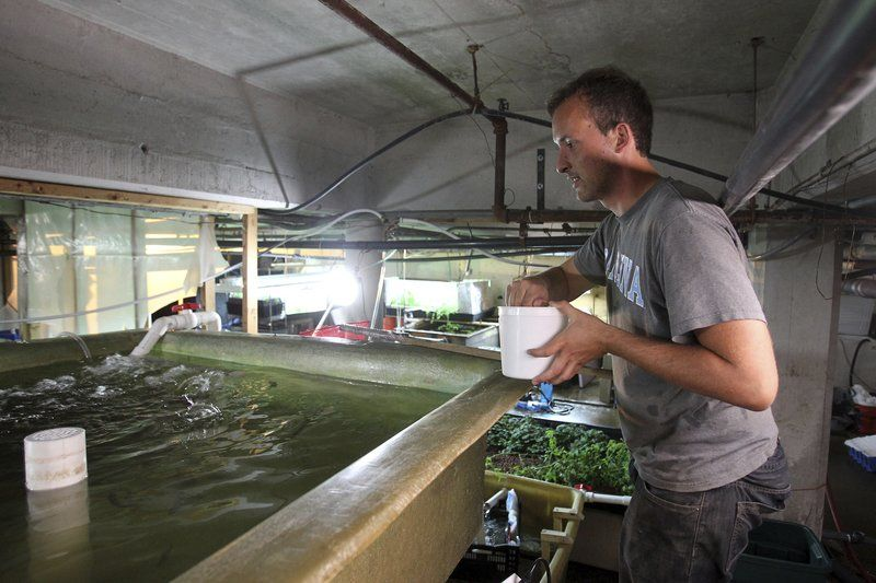 Fish farming for business business for Fish farming business