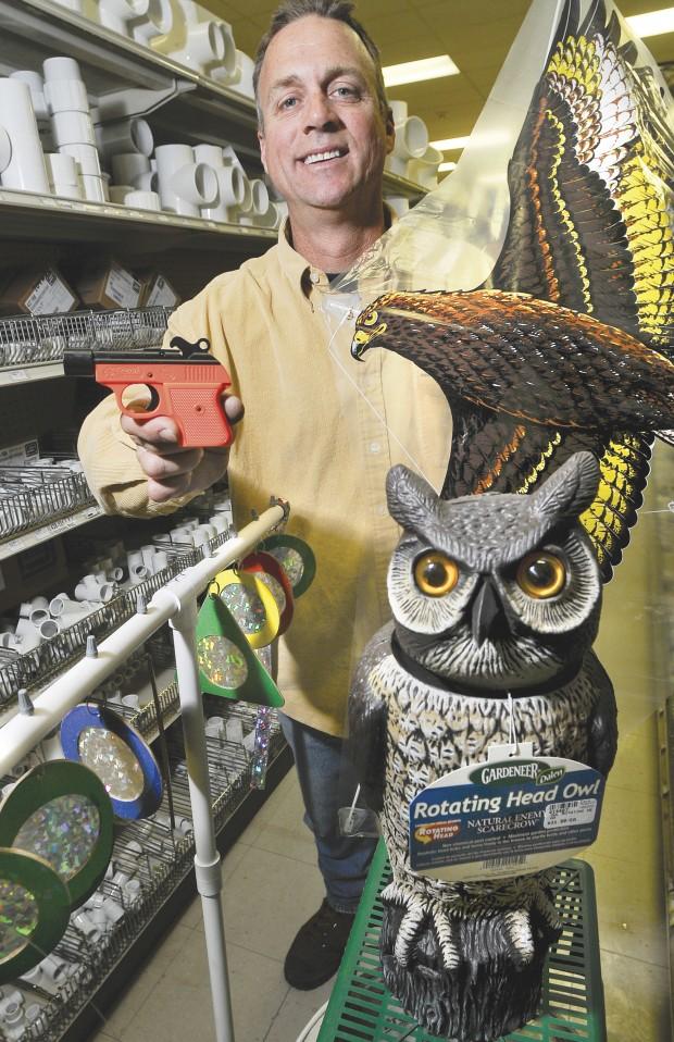 Bird Bombs Pyrotechnics 'bird Bombs' Targeted Buy Now »
