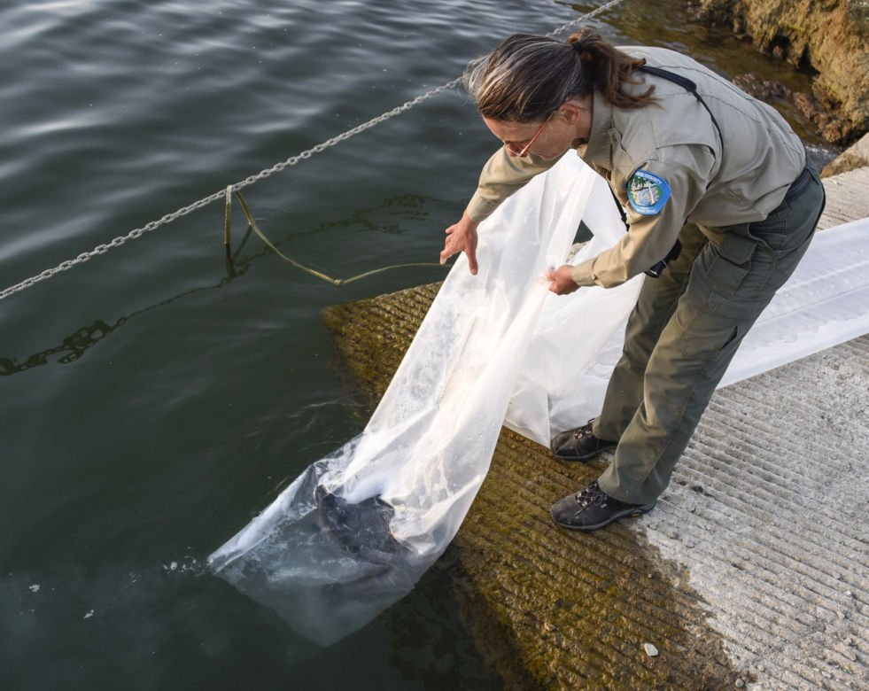 Gallery cachuma lake trout plant local news for Lake cachuma fishing report