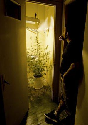 EEUU preocupado por ley de marihuana de Uruguay