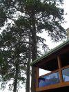 Mature trees need professional help