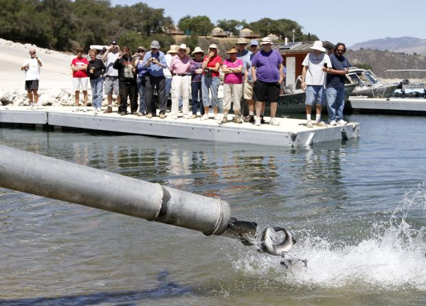 Trout planted into cachuma lake for Lake cachuma fishing report