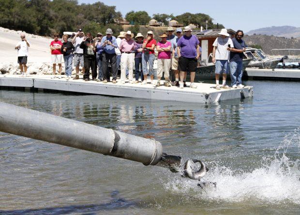 Trout planted into cachuma lake for Cachuma lake fishing