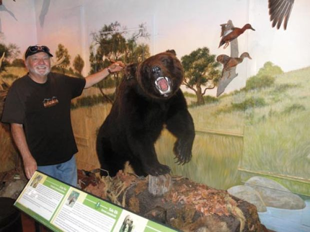 Hist Museum grizzly bear.jpg