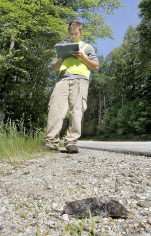 Roadkill studies
