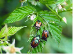 <p>Nasty pests that will eat through your garden if left untreated.</p>