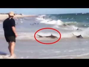 Fishermen witness rare shark feeding frenzy