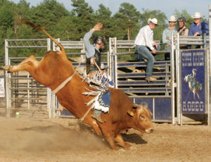 <p>The rodeo packed the grandstands Wednesday during the Western Michigan Fair.</p>