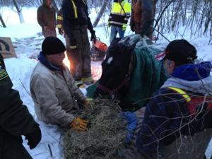 Second rescued horse now up and moving