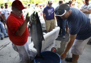 <p>Fish are weighed at the Ford dealership on Thursday for the annual Ruboy Thursday Tournement.</p>
