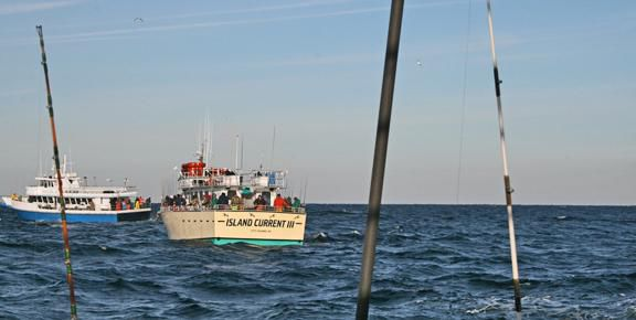 Cod fishing in connecticut in february news for Party boat fishing ct