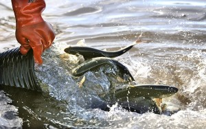 Photo: Crystal Cove trout