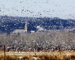 Photos: Roar of the flock