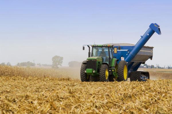 Soybean, wheat edge higher on short-covering, rains