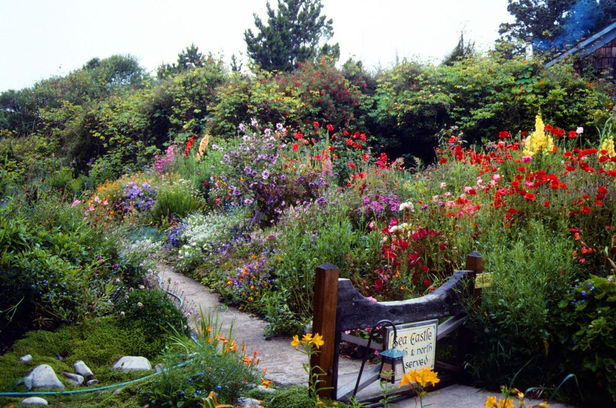 Yardsmart How to start your own perennial flower garden