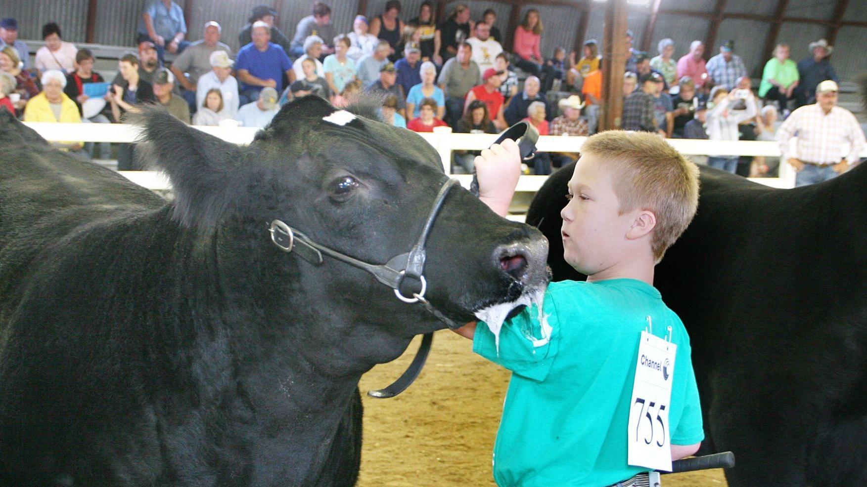 homer boy first nebraska 4 h er to show at clay county fair a1