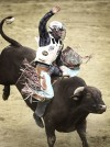 Rawhide Bull Riding Challenge