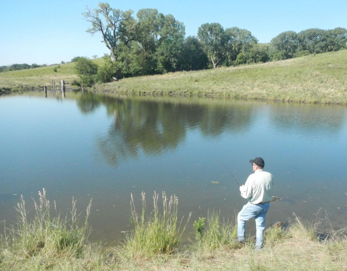 Myhre farm ponds offer bass bluegill action outdoors for Bass pond design