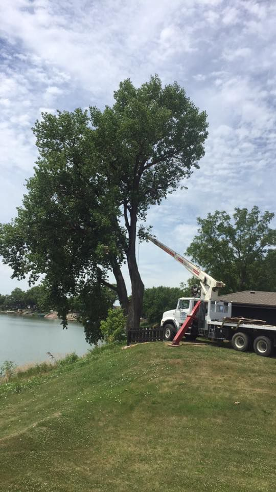 aaa tree service tree care tree pruning sioux city ia. Black Bedroom Furniture Sets. Home Design Ideas